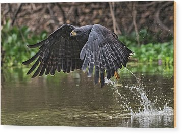 Wood Print featuring the photograph Blackhawk Fishing #1 by Wade Aiken