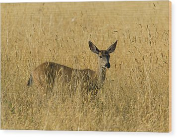 Blacktail Deer In Tall Grass Wood Print by Randall Ingalls