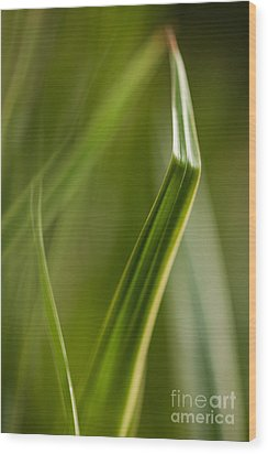 Blades Abstract 3 Wood Print by Mike Reid
