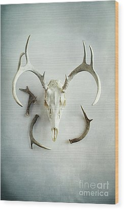 Wood Print featuring the photograph Bleached Stag Skull by Stephanie Frey