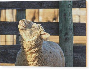 Bleating Sheep Wood Print