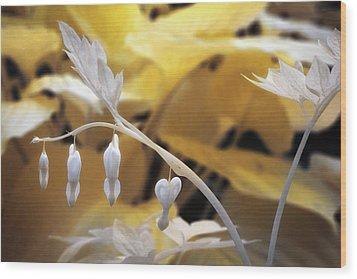 Bleeding Heart Gld Wood Print by Paul Seymour