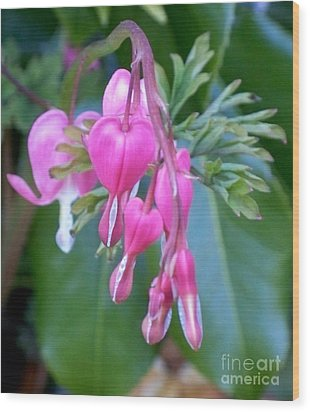 Bleeding Heart Wood Print by Vera Gadman