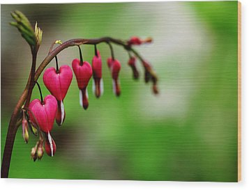 Bleeding Hearts Flower Of Romance Wood Print by Debbie Oppermann