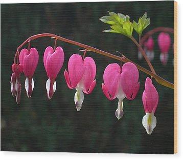 Bleeding Hearts Wood Print by Raju Alagawadi
