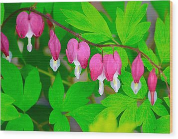 Bleeding Hearts Wood Print by Tiffany Erdman