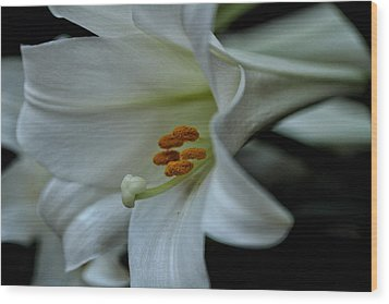 Wood Print featuring the photograph Blessings  by Connie Handscomb