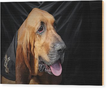 Bloodhound - Governed By A World Of Scents Wood Print by Christine Till