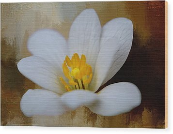 Bloodroot Wood Print by Diana Boyd