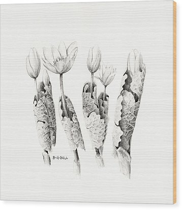 Bloodroot Group Wood Print