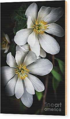 Wood Print featuring the photograph Bloodroot In Bloom by Thomas R Fletcher