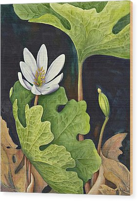 Bloodroot Wood Print by Margit Sampogna