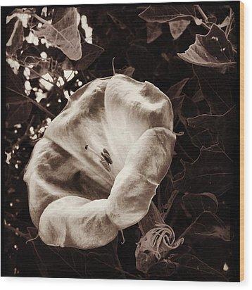 Bloom In Sepia Wood Print