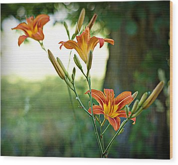 Bloom Where You're Planted Wood Print by Cricket Hackmann