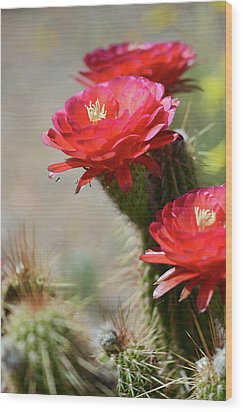 Wood Print featuring the photograph Bloomin' Cacti by Barbara Manis