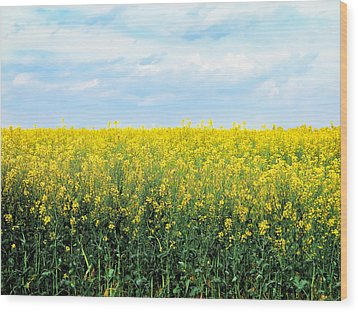 Blooming Canola - Photography Wood Print by Ann Powell