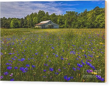 Blooming Country Meadow Wood Print by Marvin Spates
