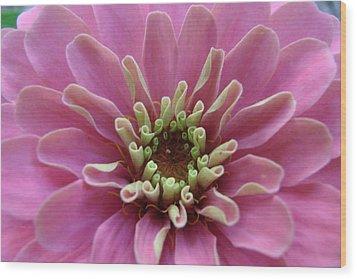 Blooming Flower Wood Print
