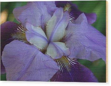 Wood Print featuring the digital art Blooming Iris by Barbara S Nickerson