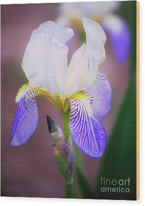 Blooming Iris Wood Print by Shawn Bamberg