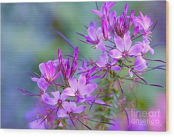 Wood Print featuring the photograph Blooming Phlox by Alana Ranney