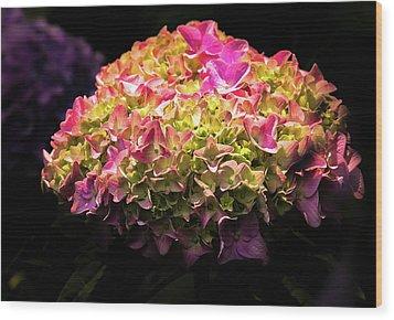 Blooming Pink Hydrangea Wood Print by Onyonet  Photo Studios