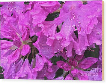 Blooming Rhododendron Wood Print