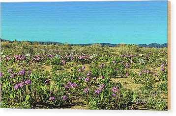 Wood Print featuring the photograph Blooming Sand Verbena by Robert Bales