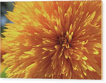 Blooming Sunshine Wood Print
