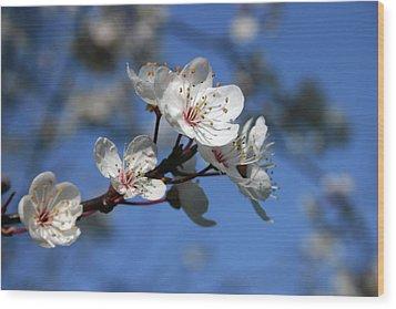 Blossom Wood Print by Martina Fagan