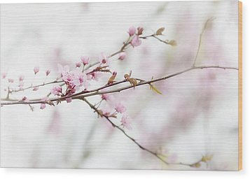 Wood Print featuring the photograph Blossom Pink by Rebecca Cozart