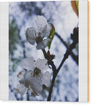 #blossom #spring #macro #flower #pretty Wood Print by Natalie Anne