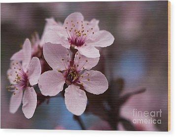 Blossom Trio Wood Print