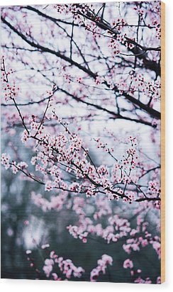 Wood Print featuring the photograph Blossoming Buds by Parker Cunningham