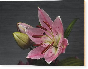 Blossoming Pink Lily Flower On Dark Background Wood Print