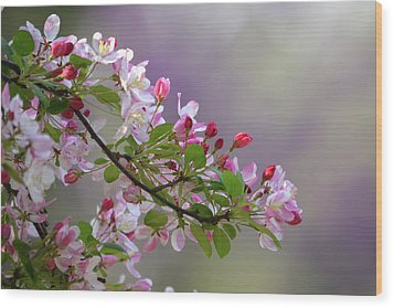 Wood Print featuring the photograph Blossoms And Bokeh by Ann Bridges