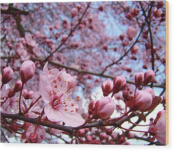 Blossoms Art Blue Sky Spring Tree Blossoms Pink Giclee Baslee Troutman Wood Print by Baslee Troutman