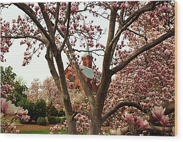 Blossoms At The Castle Wood Print by Frank Garciarubio