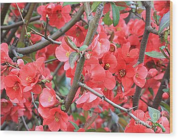 Blossoms Branches And Thorns Wood Print by Carol Groenen