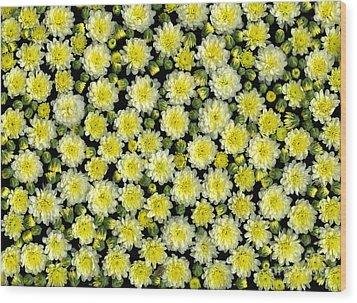 Blossoms Wood Print by Christian Slanec