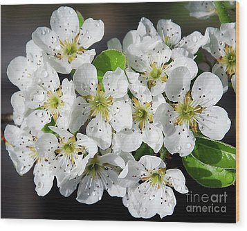 Wood Print featuring the photograph Blossoms by Elvira Ladocki