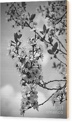 Blossoms In Black And White Wood Print by Sue Stefanowicz