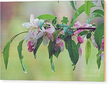 Wood Print featuring the photograph Blossoms In Spring by Lila Fisher-Wenzel