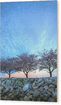 Blossoms Wood Print by JC Findley