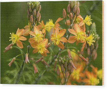 Wood Print featuring the photograph Blossoms Of Spring by Stephen Anderson