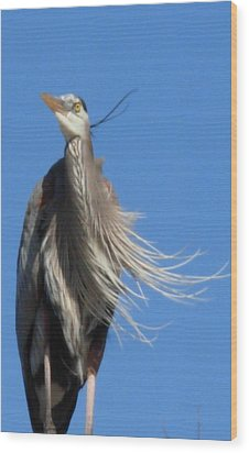 Wood Print featuring the photograph Blowing In The Wind by Jeanne Kay Juhos