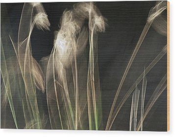 Wood Print featuring the photograph Blowing In The Wind by Roger Mullenhour