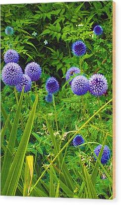 Blue Allium Flowers Wood Print by Judi Saunders