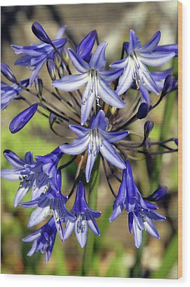 Blue Allium Wood Print by Robert Shard