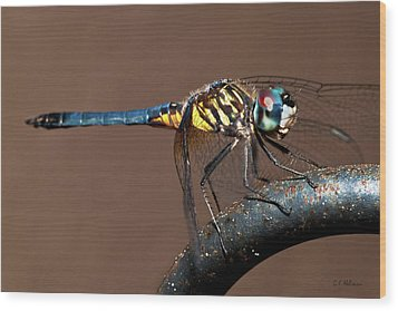 Blue And Gold Dragonfly Wood Print by Christopher Holmes